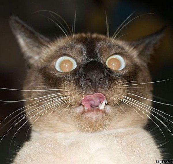 Photo chaton fond d'écran  Photo de chat