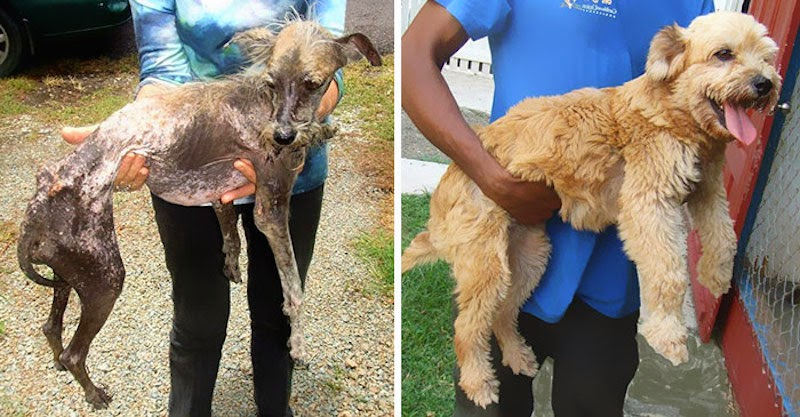 Cedar - 16 Before-and-After Photos Of Rescued Dogs