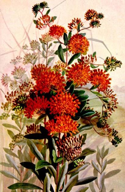 Gambar Batik Bunga