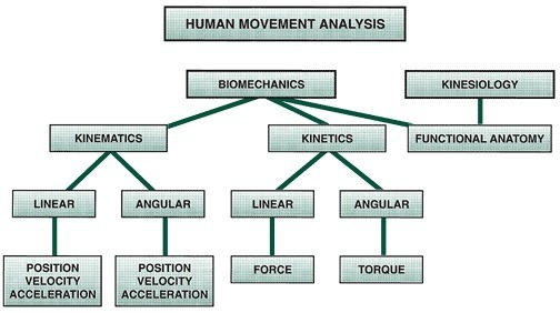 Strength is Never a Weakness: Kinematics and Kinetics: An Applied ...