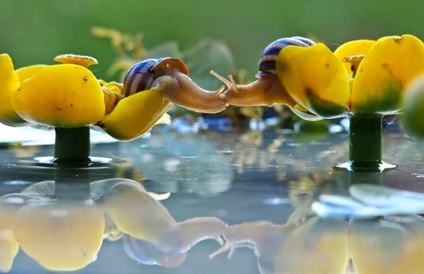 Animais se beijando: O reino animal é realmente adorável