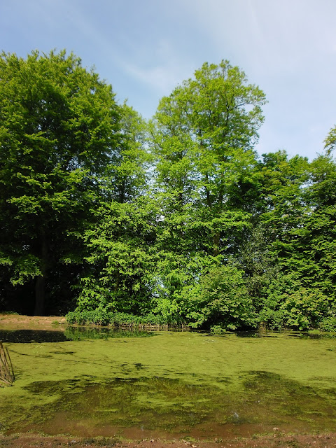 Woodland pond - Clent Hills photography