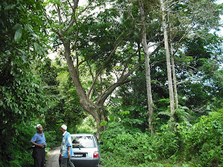 Misteri puaka pohon sena