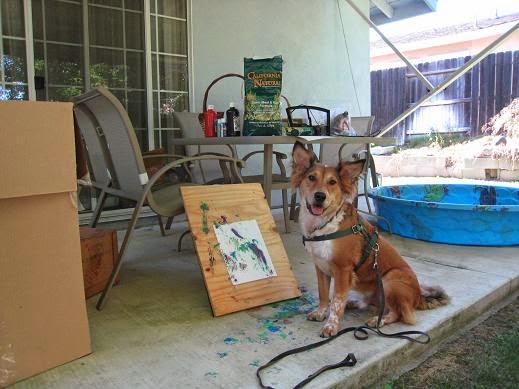 Dog Training Clicker Brisbane
