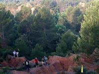En mig dels turons vermellosos hi creixen els pins ufanosos