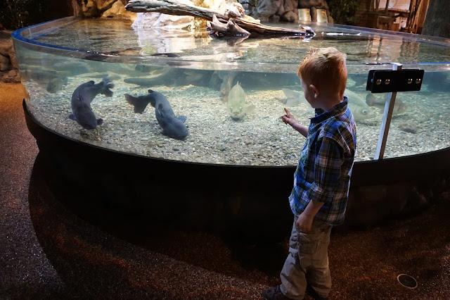 Porter Looking at Fish