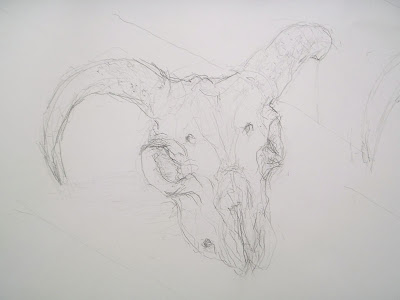 Sheep skull Skull drawn with 60 cm extended pencil on paper