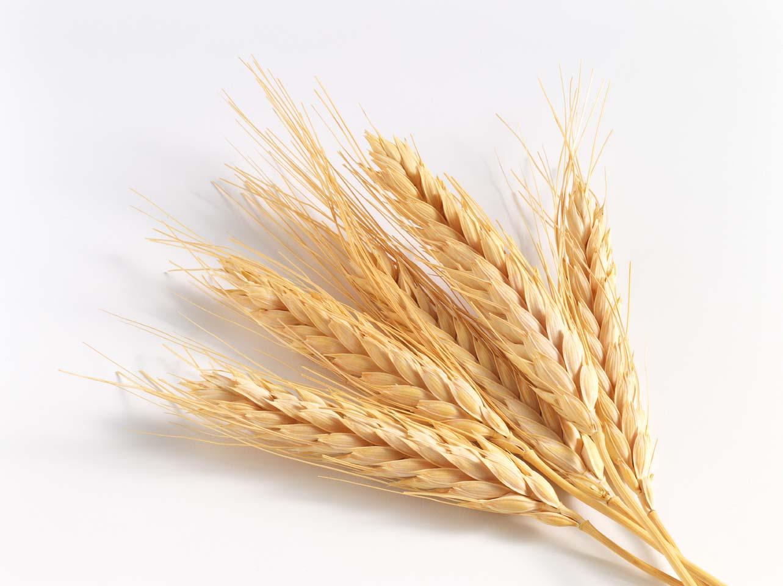Алжир объявил тендер на закупку пшеницы