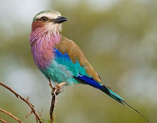 صور وخلفيات جديدة 2014 صور فواكه مناظر طبيعية ثابتة ومتحركة طيور وأطفال