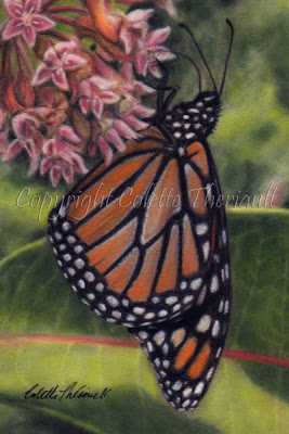 Monarch Butterfly Painting in Pastel by Award Winning Animal Artist Colette Theriault
