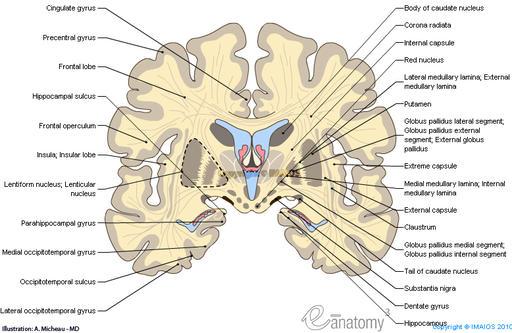 Brain Parts Diagram   Brain Puzzles Image