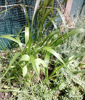 bird seed garden