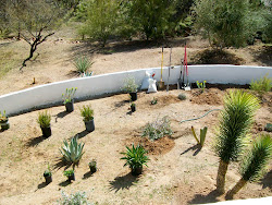 Desert Garden on the Cusp.