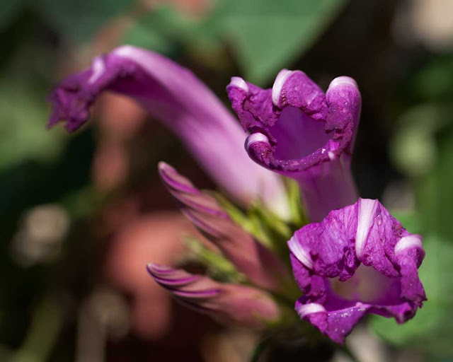 Photo showing purple flowers