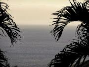 Palm trees, Kailua-Kona