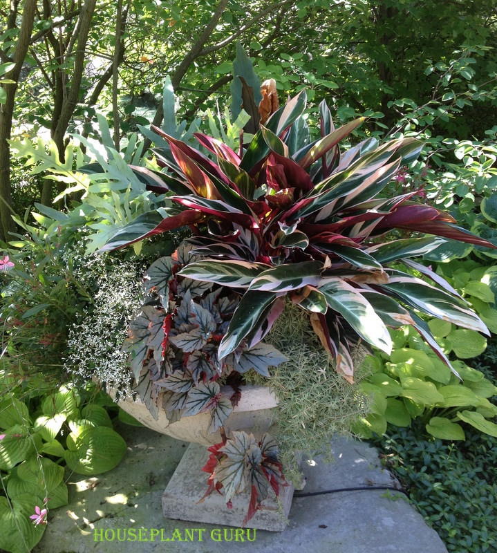 Houseplant guru houseplants for summer containers - Flower box ideas for summer ...