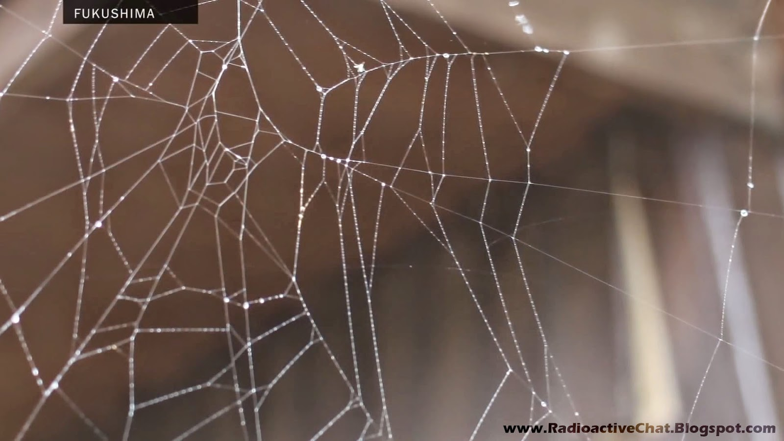 The Animals of Chernobyl - Deformed Spider Webs Fukushima Fallout Radiation