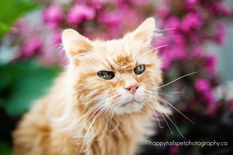 Orange cat.