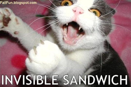 Questions Funny Cat Funny Invisible Sandwich Cat