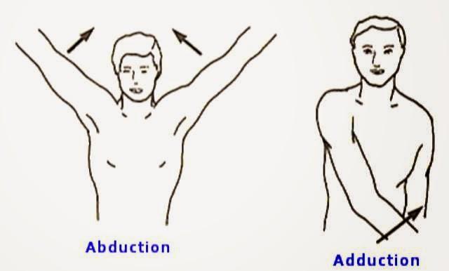 Anatomía Para el Movimiento: EL MOVIMIENTO