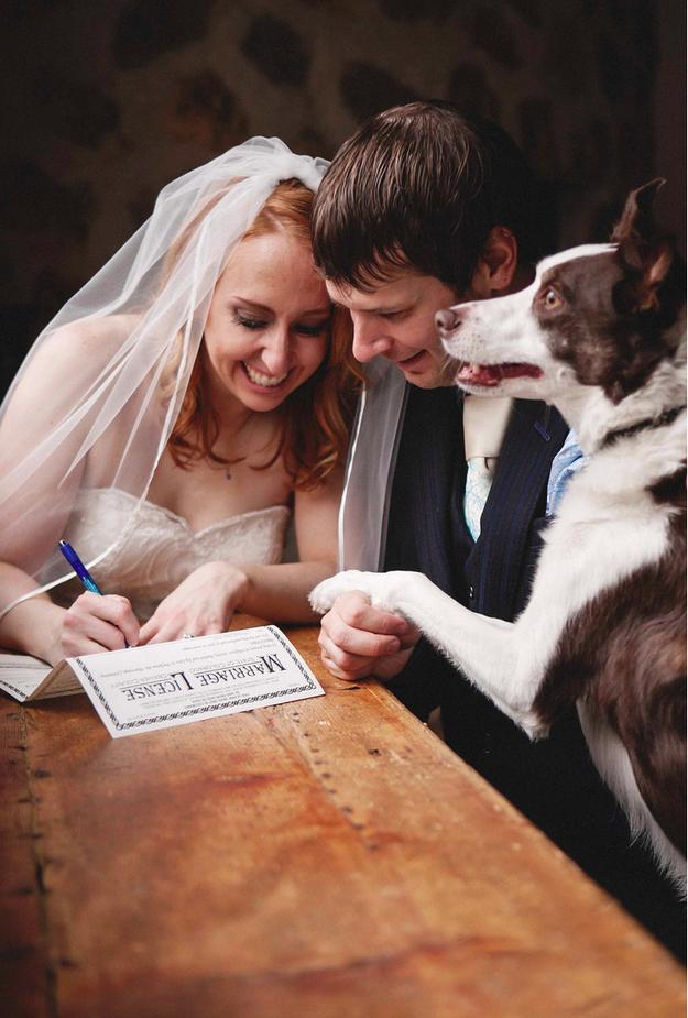Fotos de Casamento com Cachorros