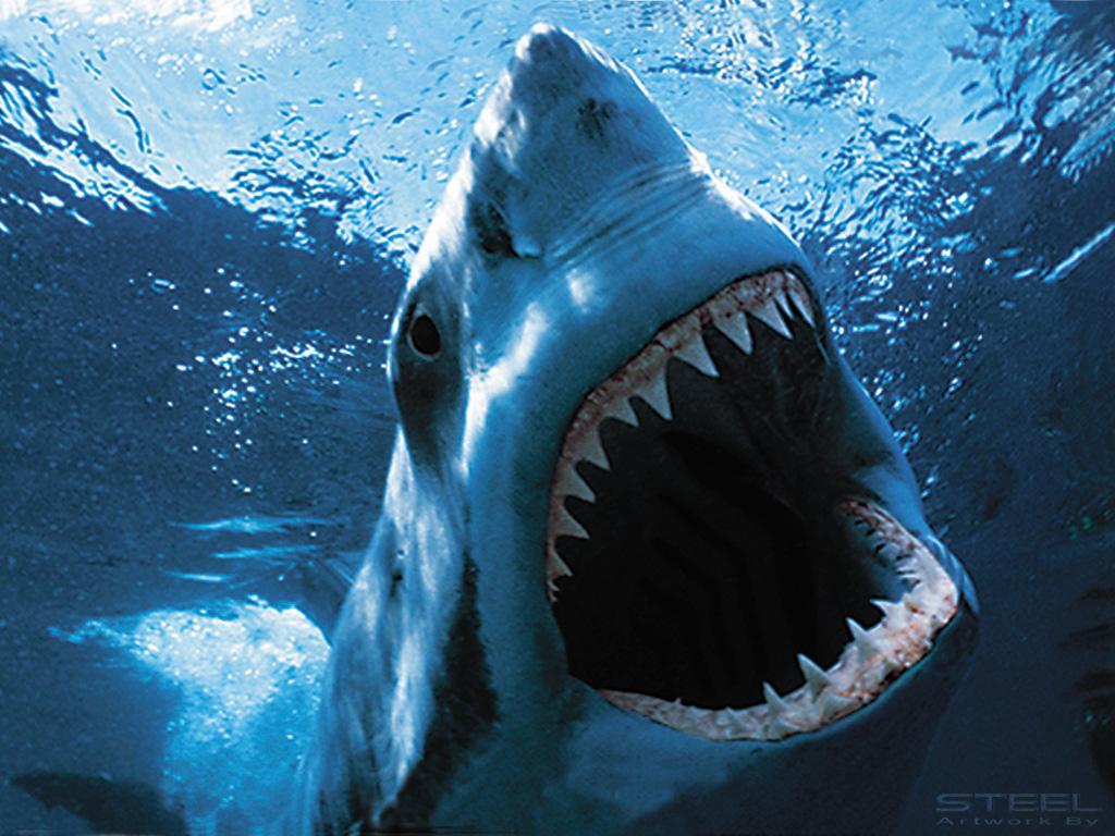 get shark wallpaper - photo #30