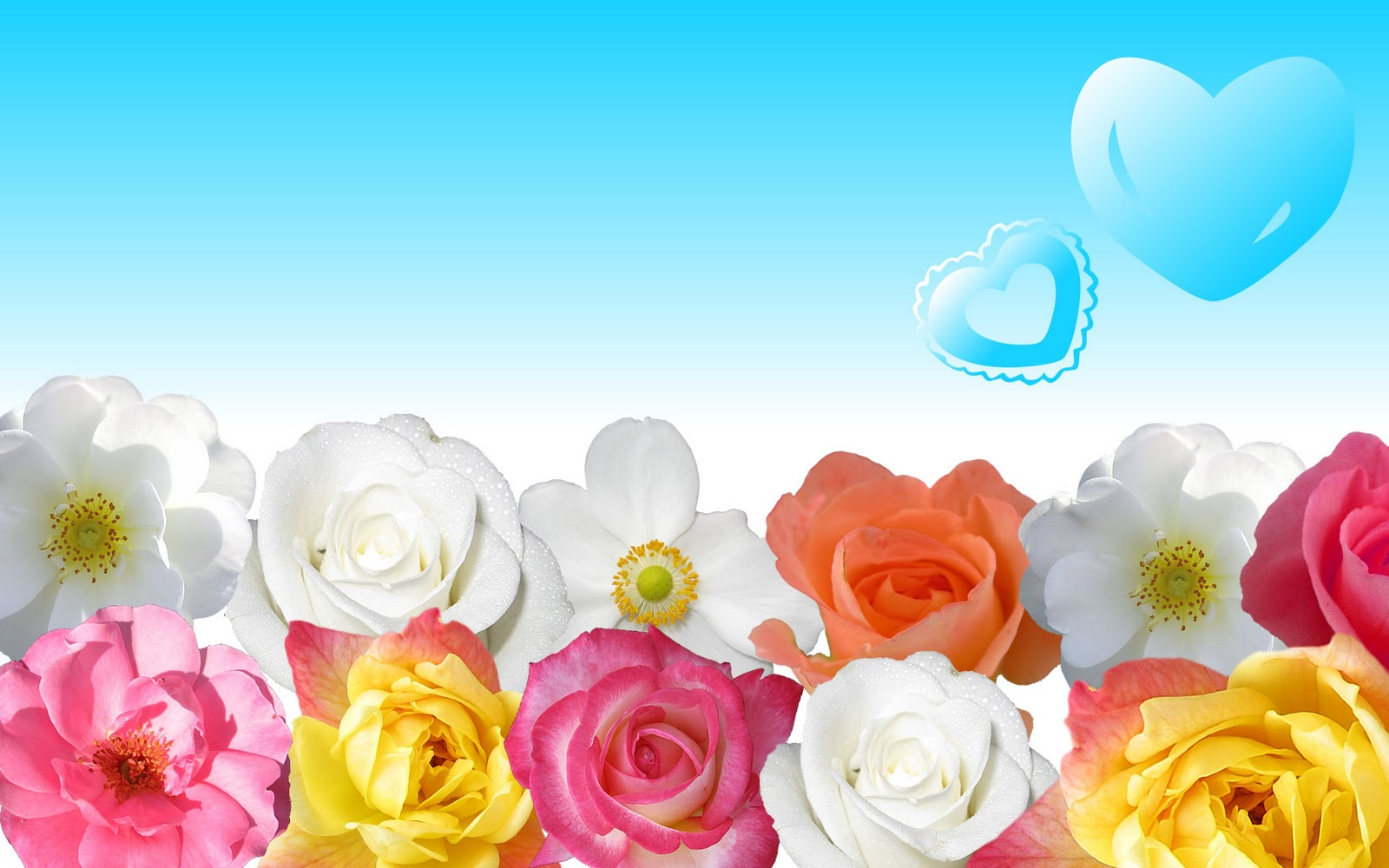 Beautiful Flowers Desktop