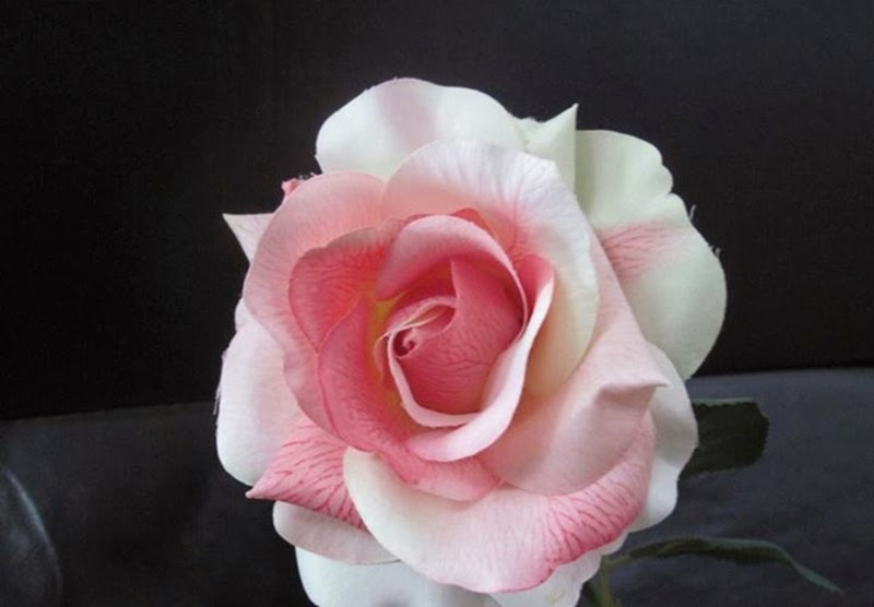 Beautiful Stock White Pink Color Rose Flowers Images Photos Online Wallpapers