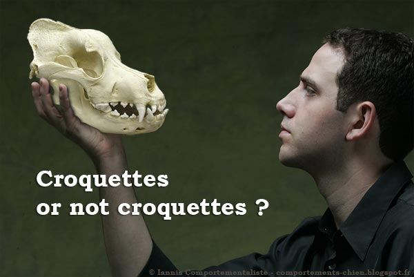 Croquettes or not croquettes ?