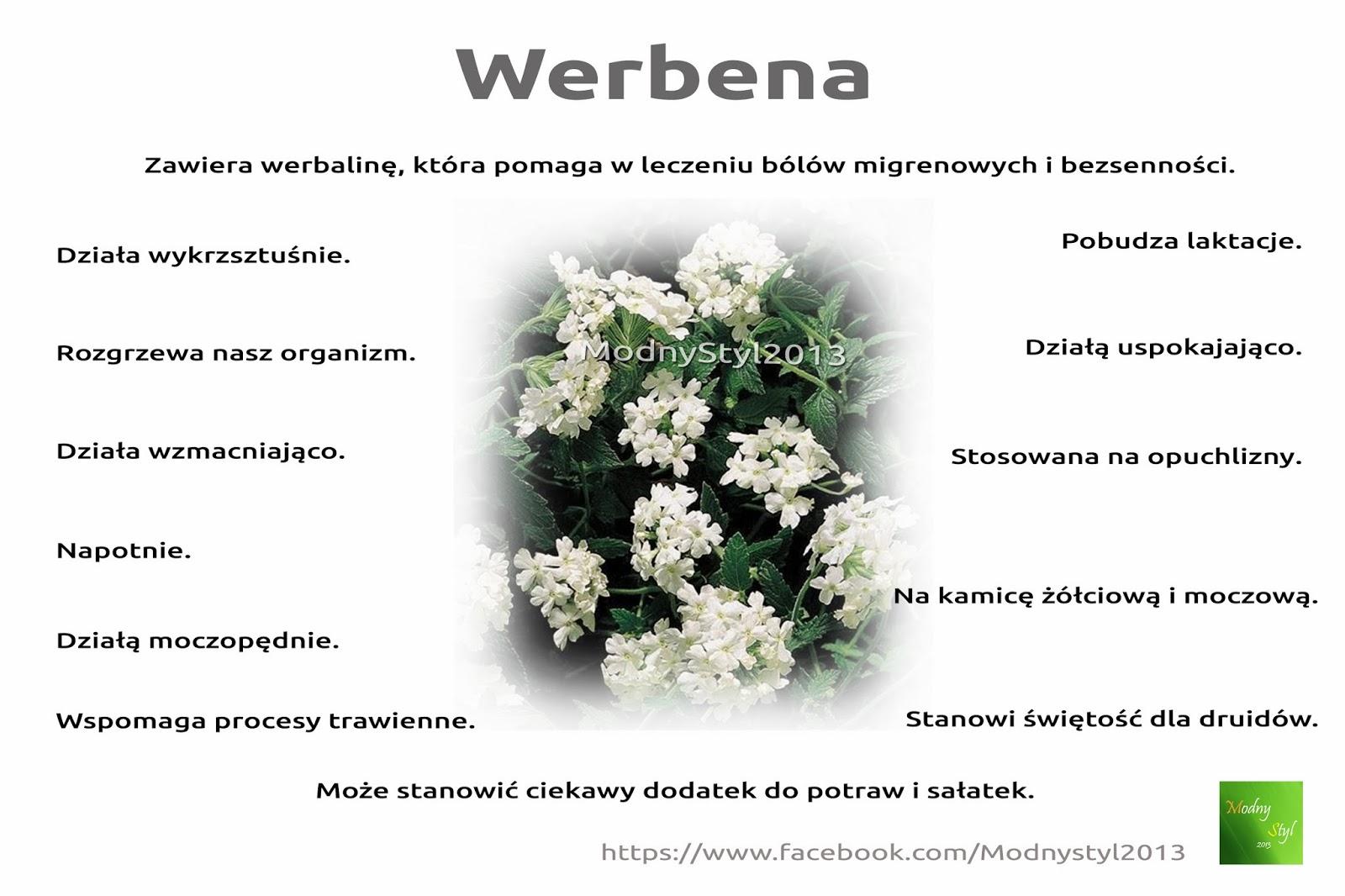 Werbena pospolita