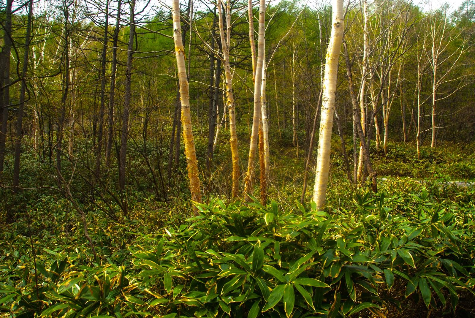 峠道を登る最中の森林