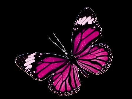 Imagenes png de mariposas - Imagui