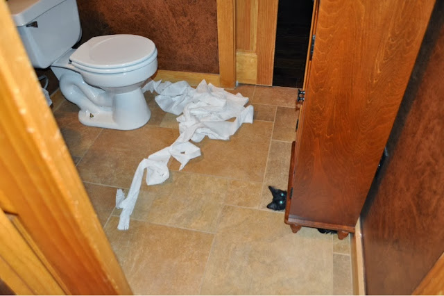 Funny cats - part 81 (40 pics + 10 gifs), cat pics, cat playing with toilet paper