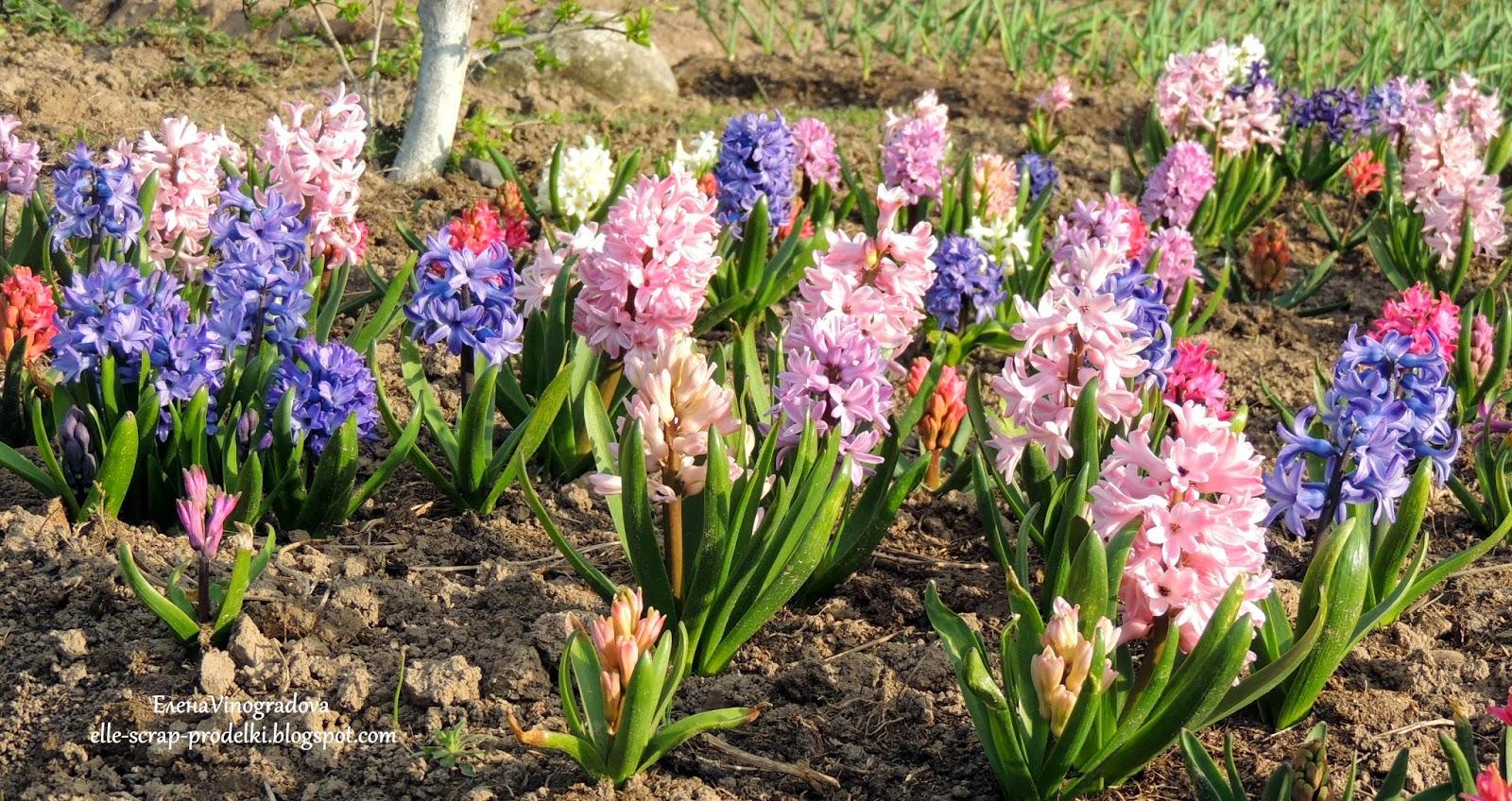 ЕленаVinogradova. Цветы нашего сада #13