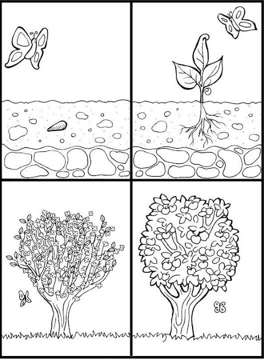 De la semilla al árbol secuencias temporales infantiles ~ IMPRIMIR ...