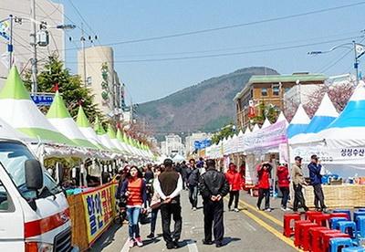 Festival bunga sakura di Jinhae Korea