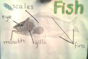 FISH PARTS. Etiquetas: BILINGÜISMO No hay comentarios: