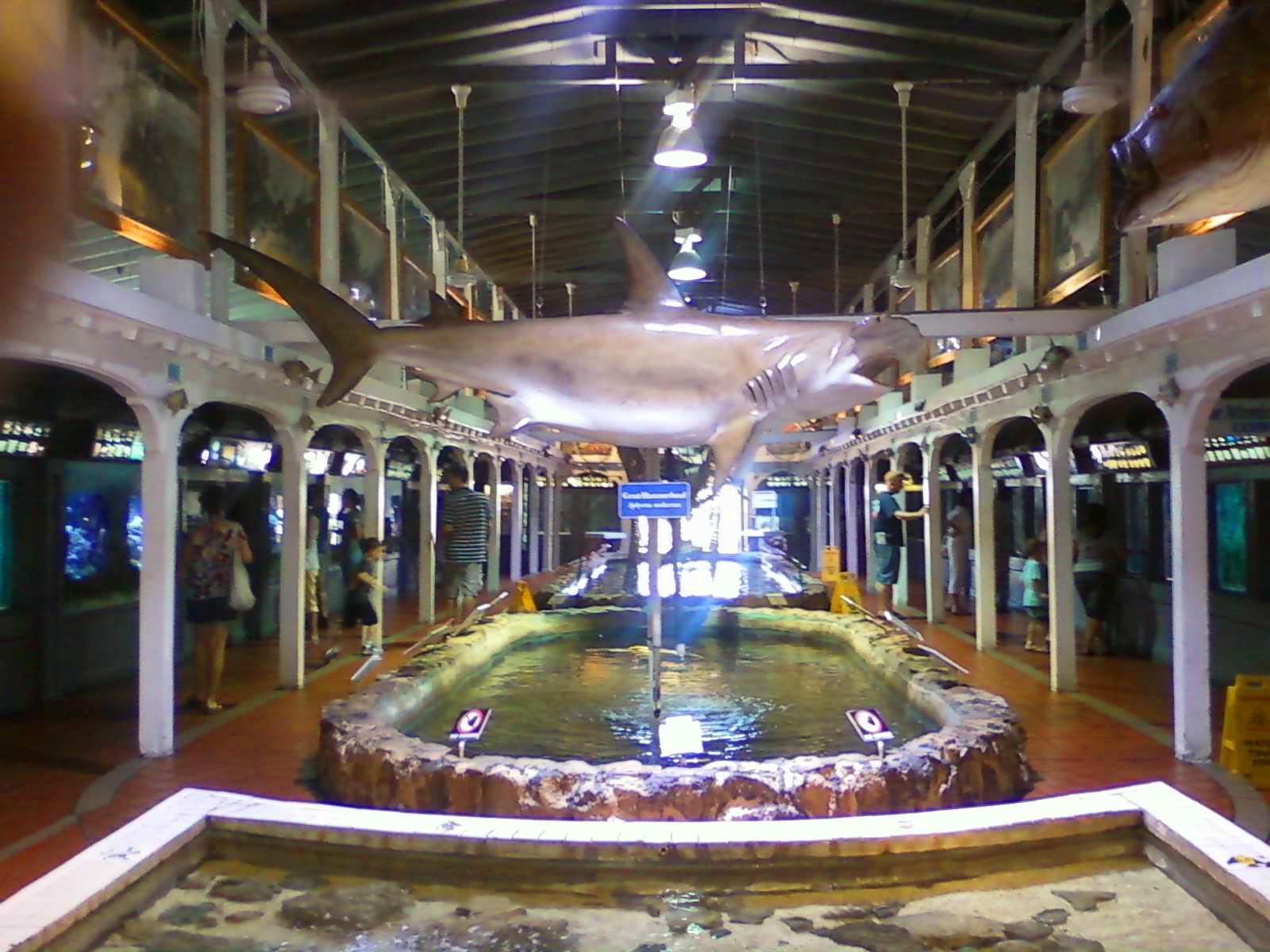 What Was I Thinking Key West Aquarium Quaint Cozy Educational Fun