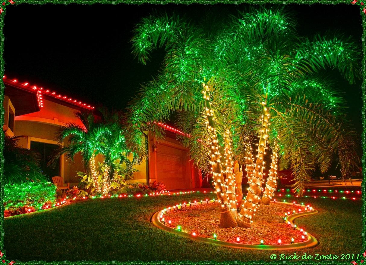 Palm Tree Christmas Lights   Photo #29. All Nature Sings: Square Peg Meets  Round Hole