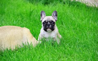 Cachorro en pasto