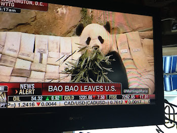 Is Trump to Blame for Bao Bao Leaving ?