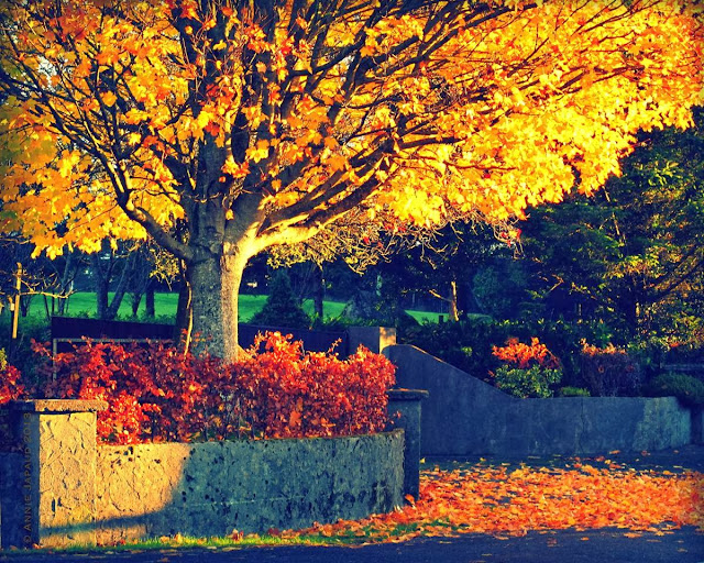 leaves for gold© Annie Japaud 2013, blog, photography, autumn, leaves, nature, colourful, golden, Oughterard, Galway, Ireland