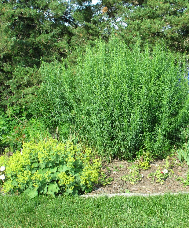 Garden Fancy July 2014