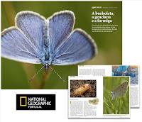 Borboleta-azul-das-turfeiras :: Artigo National Geographic - Portugal