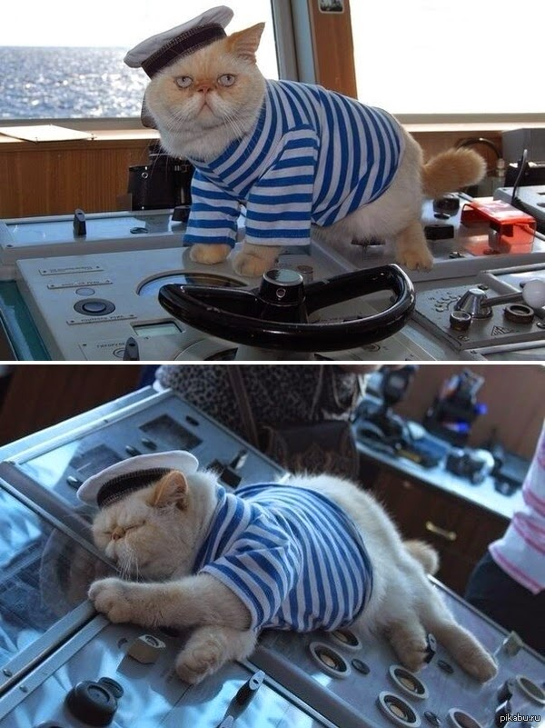 "Meet the captain cat a resident of a Russian heavy atomic battlecruiser ""Pyotr Velikij""."