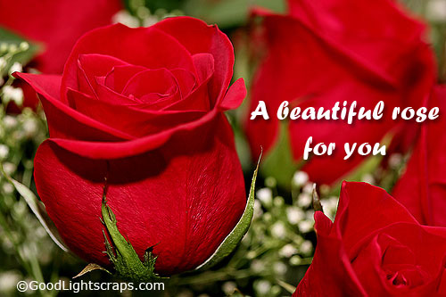 I Love You Quotes With Roses : Rose quotes, yellow rose quotes, white rose quotes