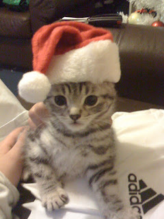 cute silver tabby kitten wearing a santa hat