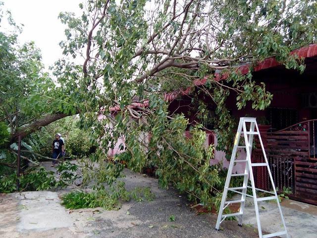 pokok tumbang atas rumah