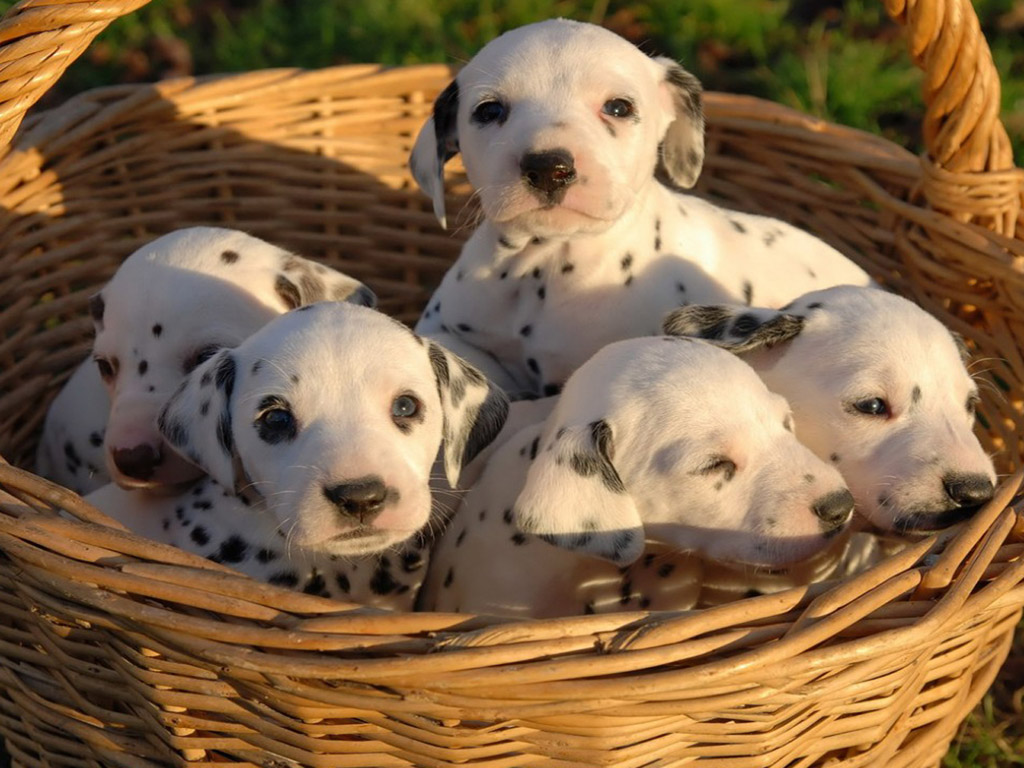 Image Result For Can Dogs Recognize