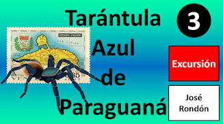Tarántula Azul de Paraguaná